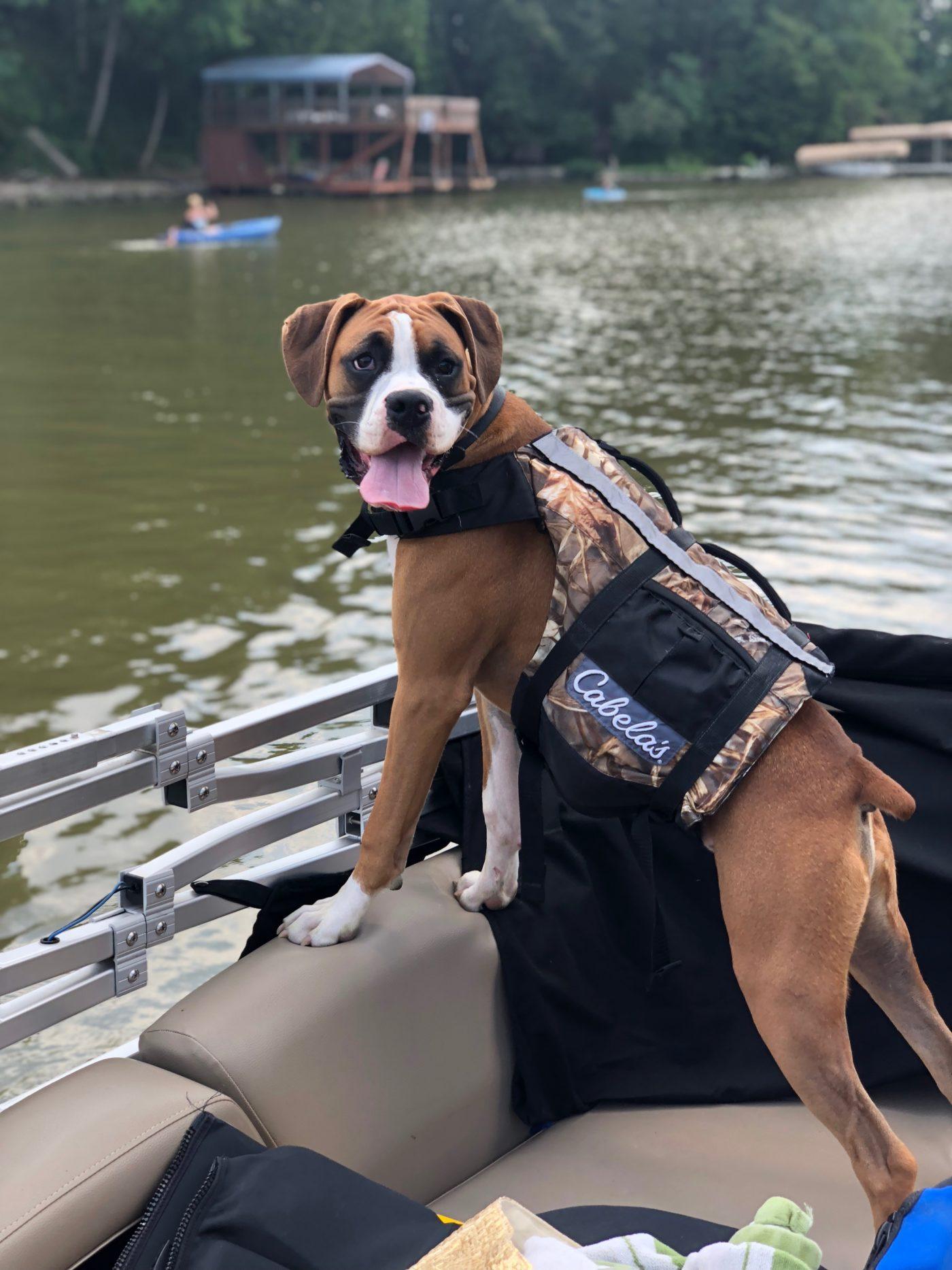 #boxerdogtraining #bestdogtraininglouisville #professionaldogtrainerlouisville