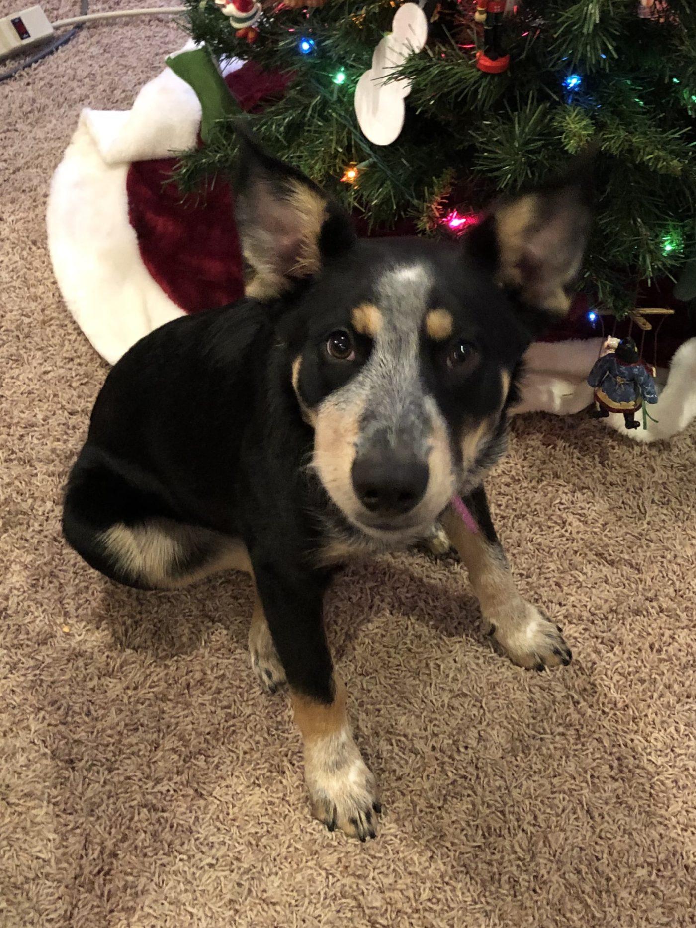 #puppytrainingLouisville